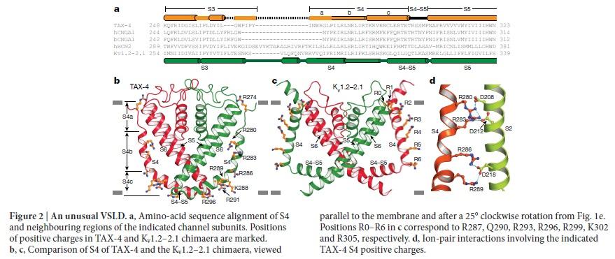 Origin of phototransduction, the visual cycle, photoreceptors and retina  Eukary11