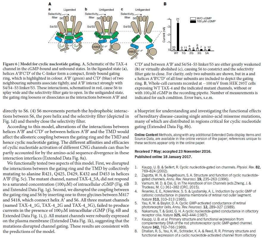 Origin of phototransduction, the visual cycle, photoreceptors and retina  Eukary12