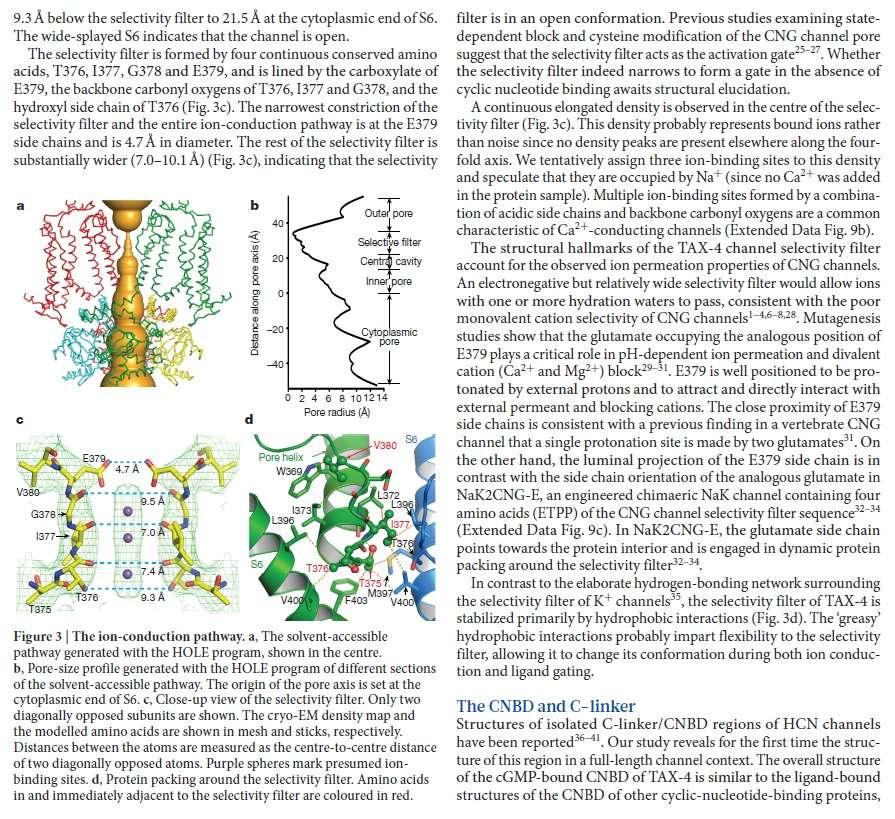 Origin of phototransduction, the visual cycle, photoreceptors and retina  Eukary13