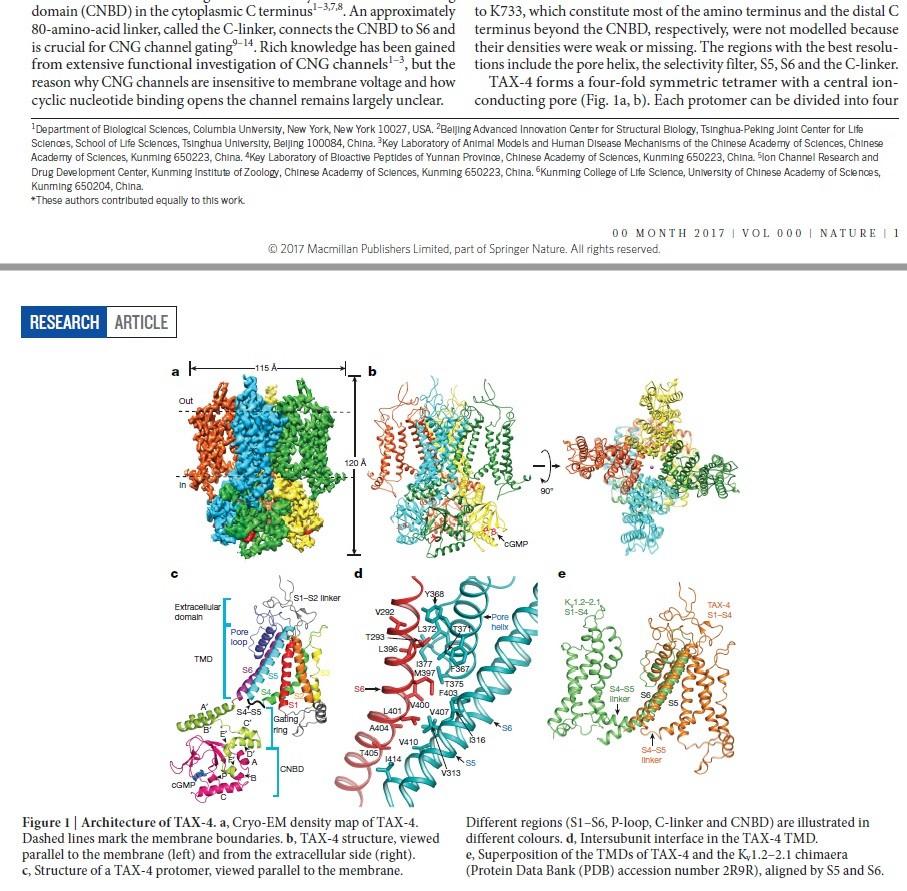 Origin of phototransduction, the visual cycle, photoreceptors and retina  Eukary14