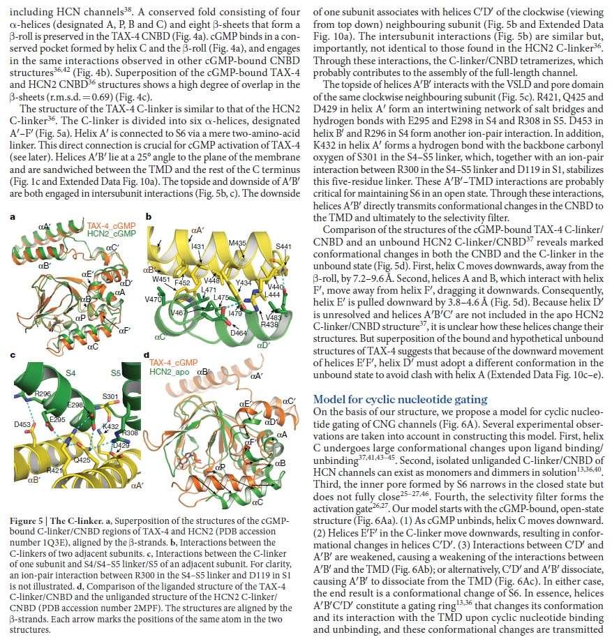 Origin of phototransduction, the visual cycle, photoreceptors and retina  Eukary17