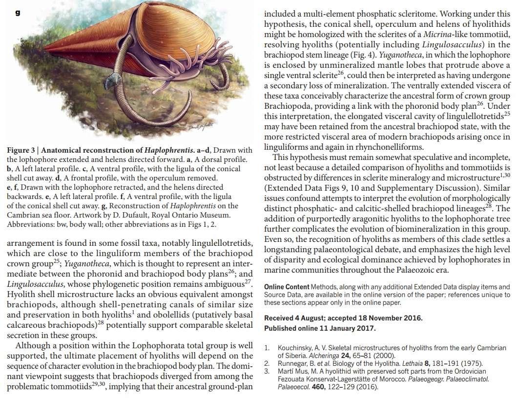 Hyolith, An Ancient 'Ice Cream Cone' Hyolit14