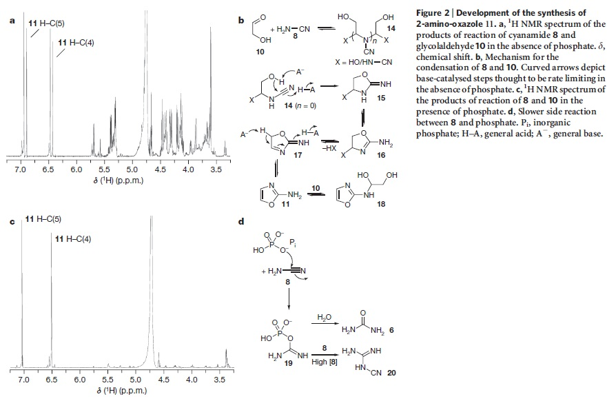 DNA & origin of life scenarios Pyrimi11