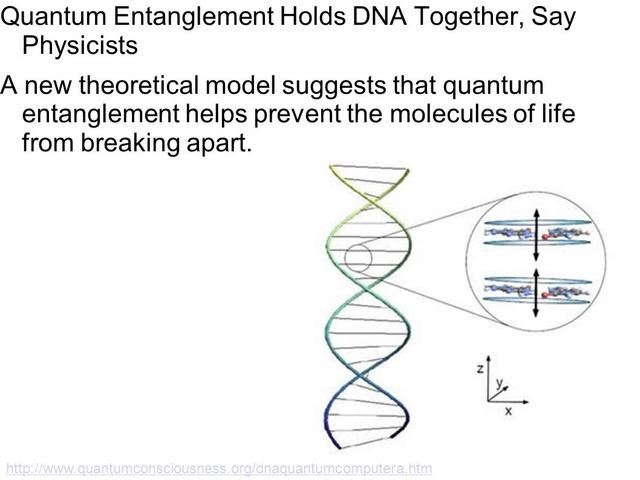 Quantum entanglement holds and repairs together life's blueprint Quantu10