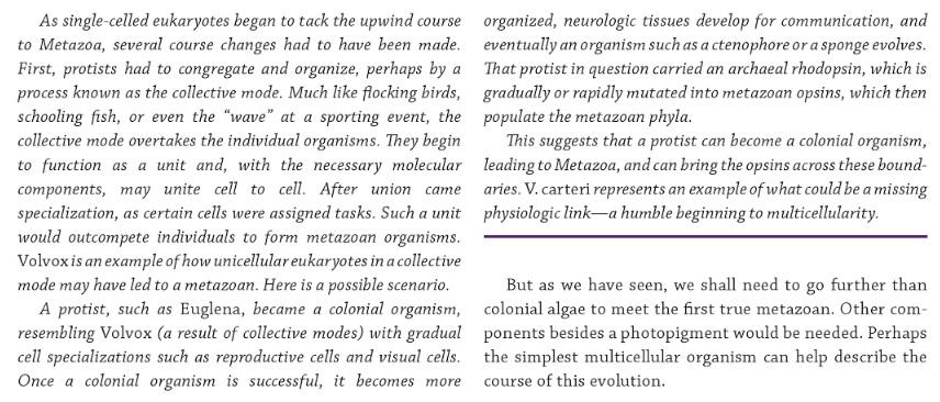 Origin of phototransduction, the visual cycle, photoreceptors and retina  Warnow10