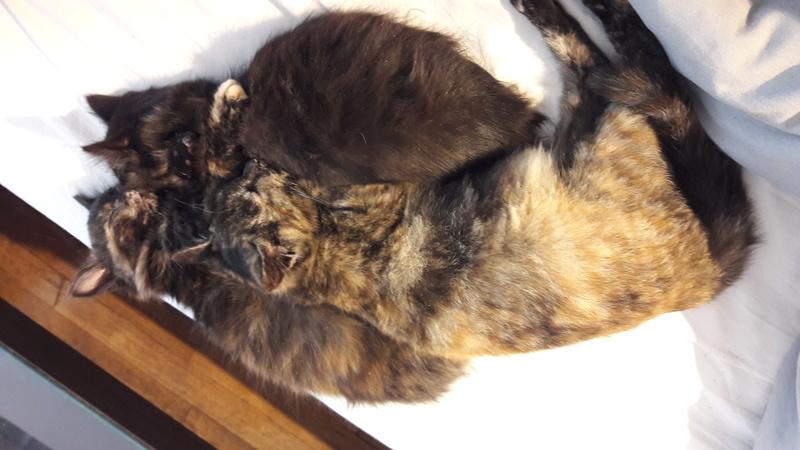News du 23 octobre 2017 - 4 petits chatons métro 20171044