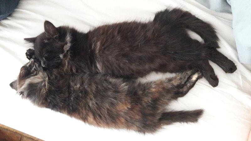News du 23 octobre 2017 - 4 petits chatons métro 20171045