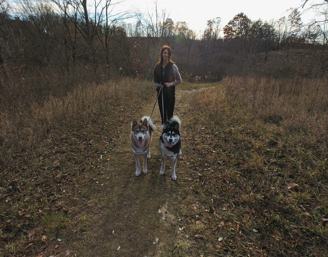 Jasper, Cody and Zoey  Img_2015