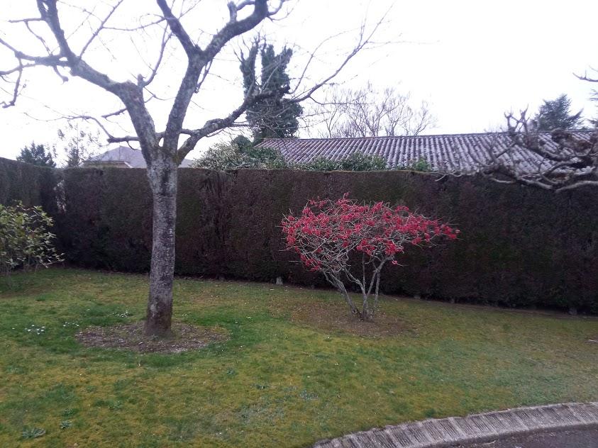 Début d'un jardin exotique Lourdais Arbre_10