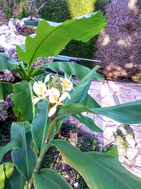 Début d'un jardin exotique Lourdais Fleurs11