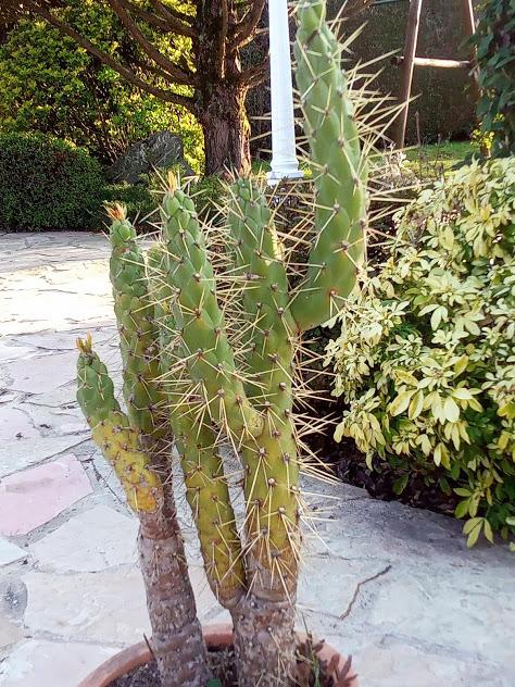 Cactus à identifier Img_2017