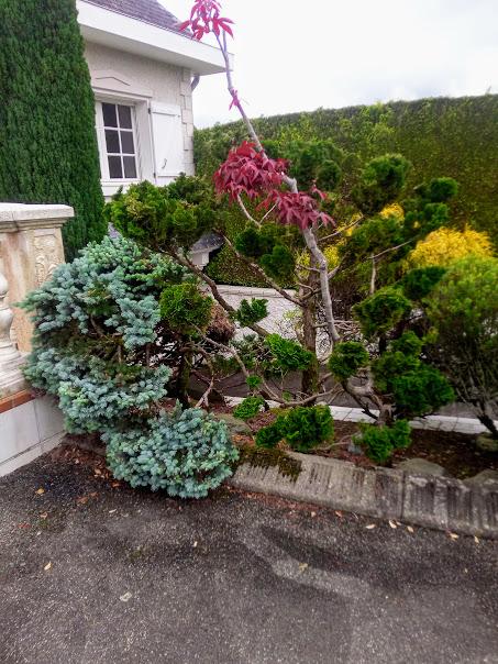 Début d'un jardin exotique Lourdais Img_2025
