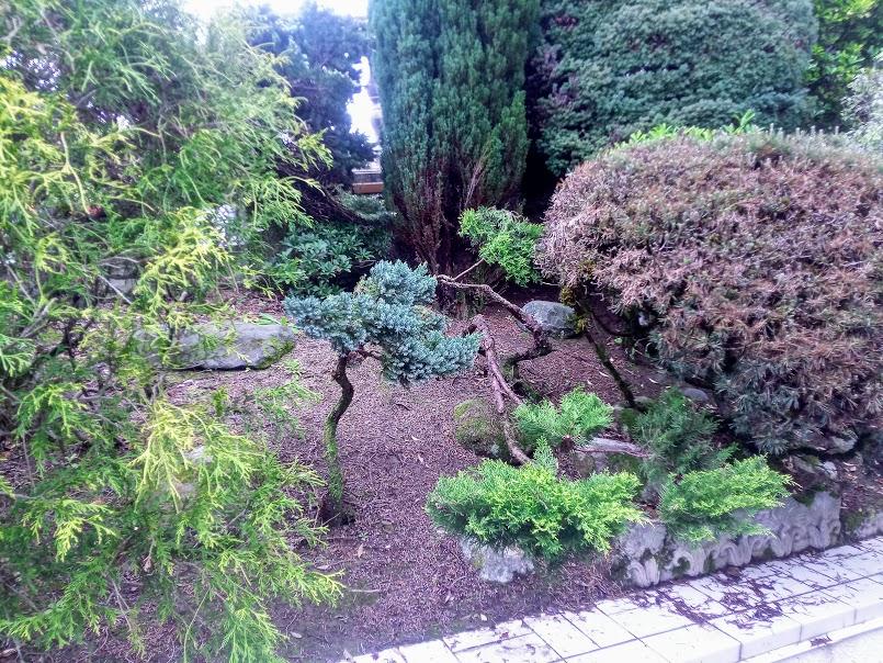 Début d'un jardin exotique Lourdais Img_2026