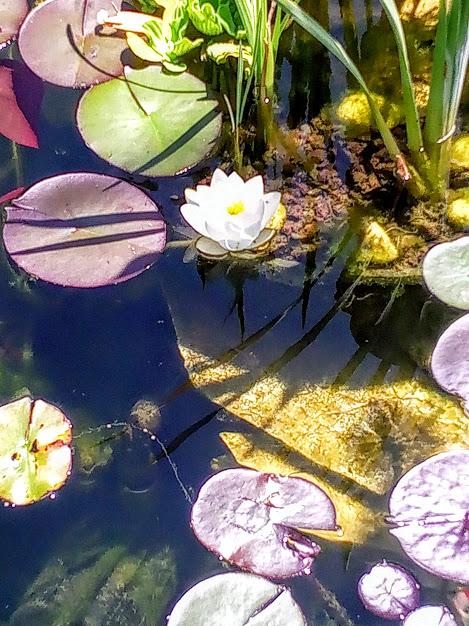 Début d'un jardin exotique Lourdais Img_2029