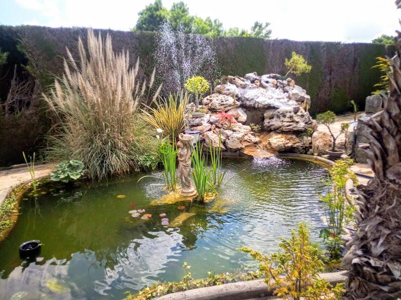 Début d'un jardin exotique Lourdais Jet_d_10