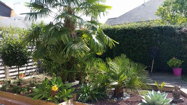 Mon jardin en Mayenne 20170911