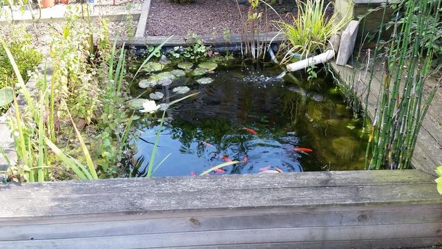 Mon jardin en Mayenne 20170914