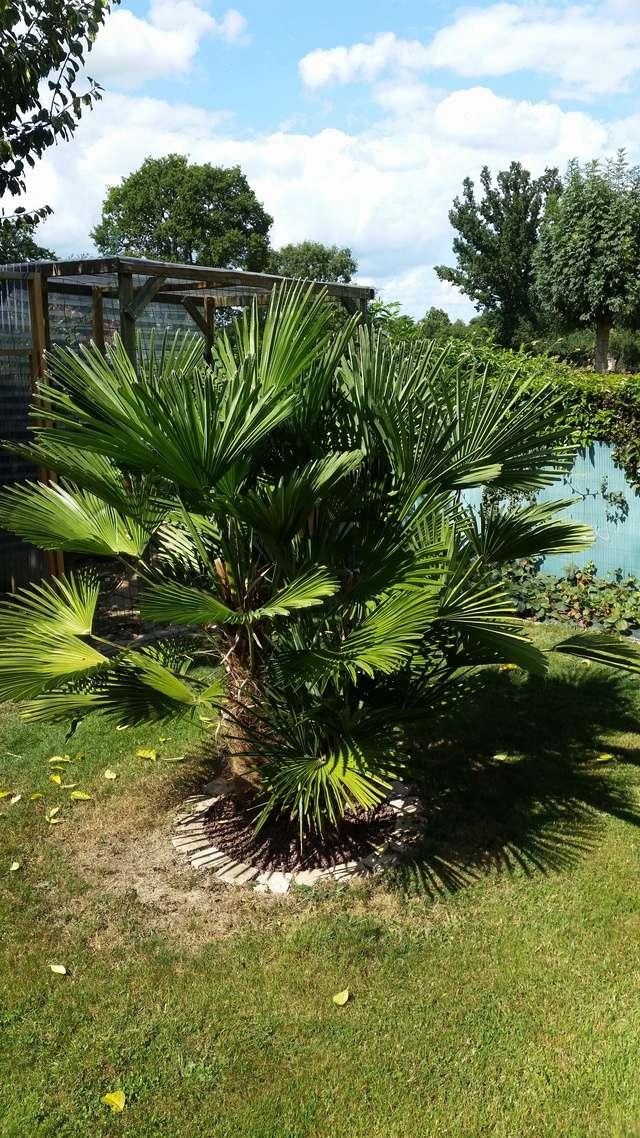 Mon jardin en Mayenne 20170915