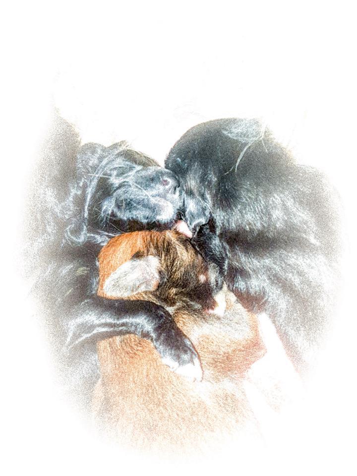 В питомнике родились щенки. Дубль помет   26904610