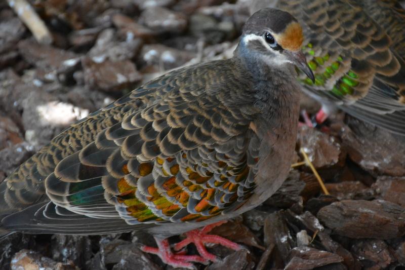 Mes autres oiseaux.  Dsc_0412