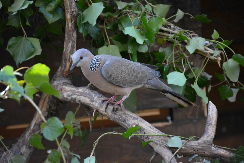 Mes autres oiseaux.  Dsc_1112