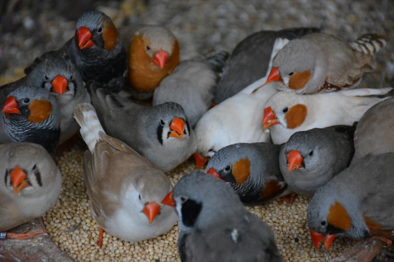 Mes autres oiseaux.  Dsc_1213