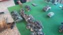 partie warhammer 40k samedi 14 octobre 2017 Dsc_0413