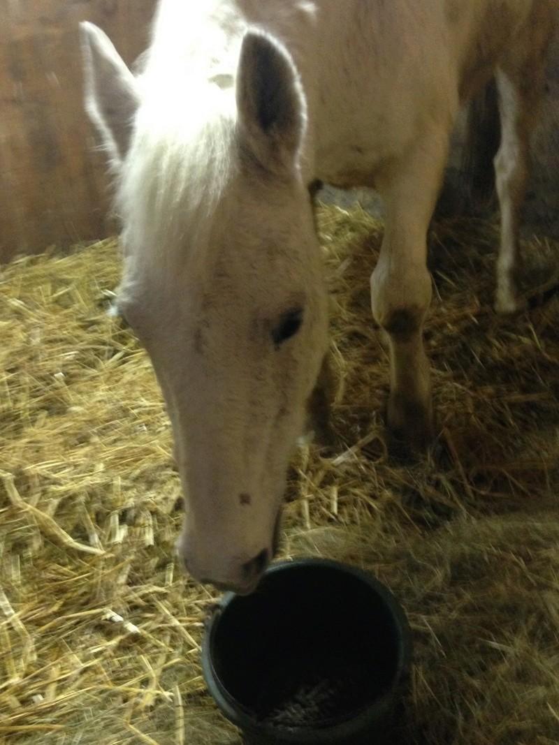 Dept 18 , Hérisson cheval de selle OC né en Avril 1995 en Famille d'Acceuil chez Hélène - Page 2 Img_0510