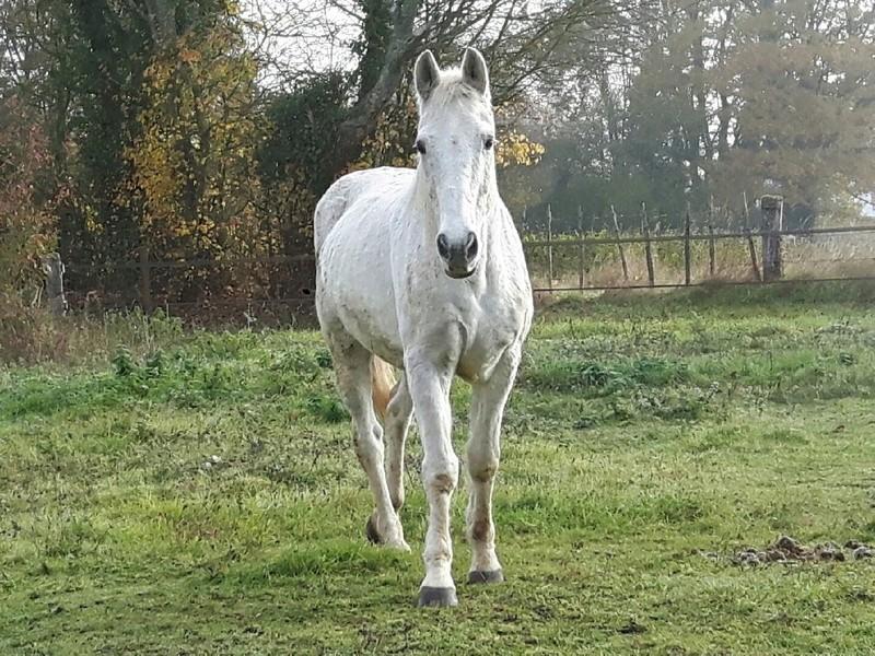 Dept 18 , Hérisson cheval de selle OC né en Avril 1995 en Famille d'Acceuil chez Hélène - Page 2 Resize17