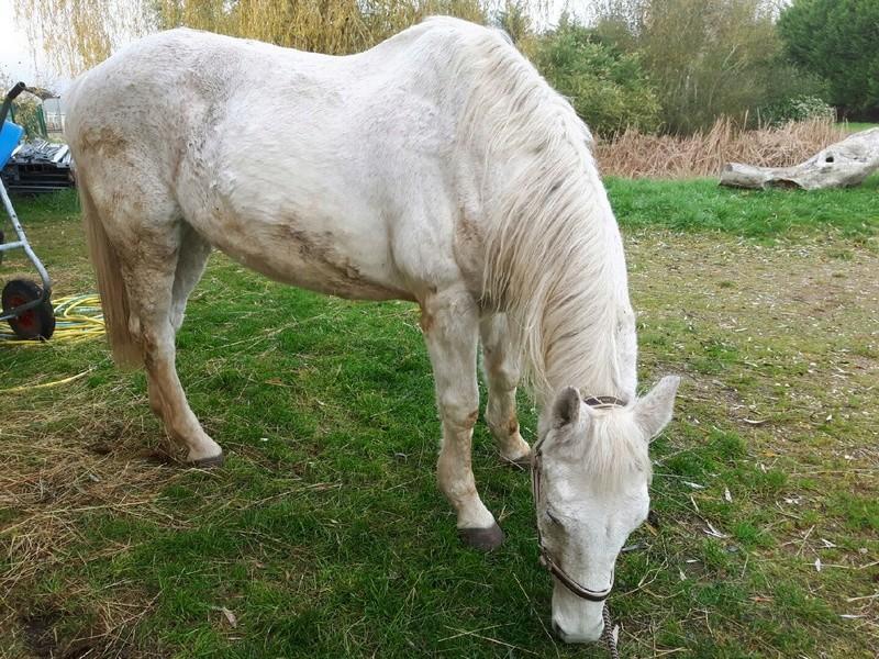 Dept 18 , Hérisson cheval de selle OC né en Avril 1995 en Famille d'Acceuil chez Hélène - Page 2 Resize19
