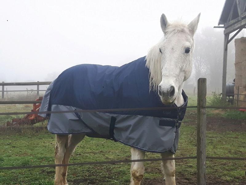 Dept 18 , Hérisson cheval de selle OC né en Avril 1995 en Famille d'Acceuil chez Hélène - Page 2 Resize20