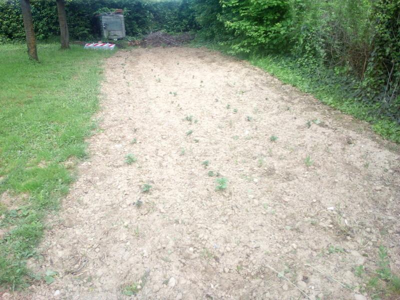 le jardin demarre juste Img_2063