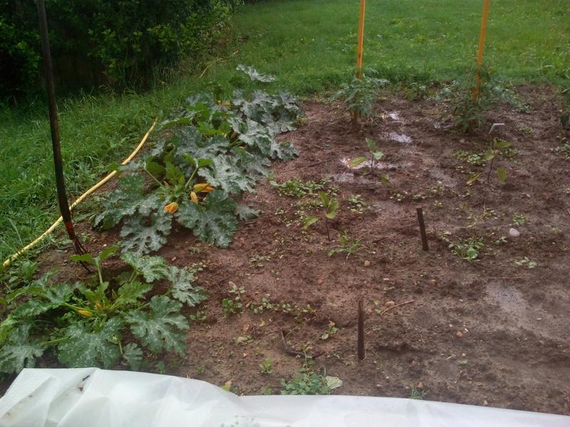 le jardin demarre juste Img_2120