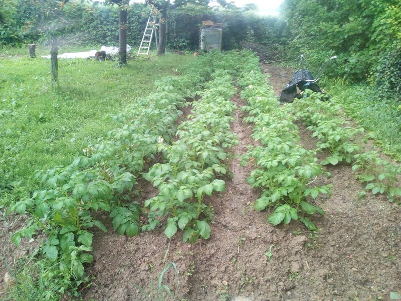 le jardin demarre juste Img_2123