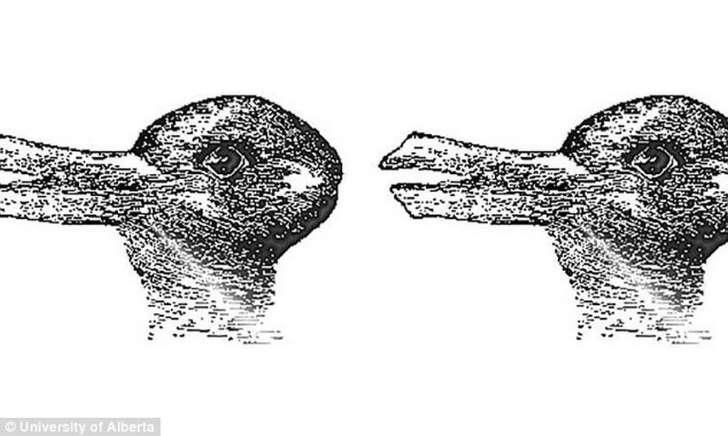 Quel animal voyez-vous sur cette image ? Bbk2p310