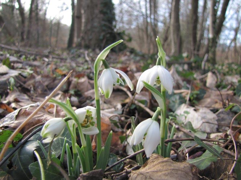Ca perce pas la neige en Alsace ! Img_3511