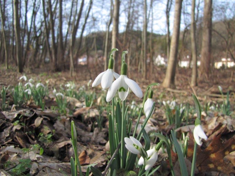 Ca perce pas la neige en Alsace ! Img_3512