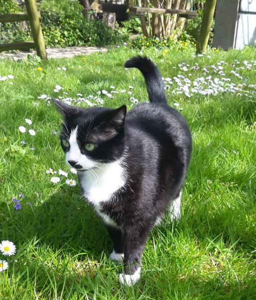 HUNA, chatte européenne Noire&blanche, née en 2012 Huna_111