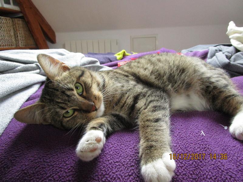 NUMEROBIS, chat européenne robe marron tabby, né en Janvier 2017 Img_0710