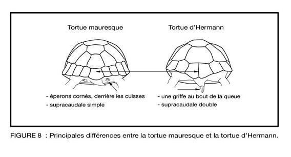 espèces tortues Dff10