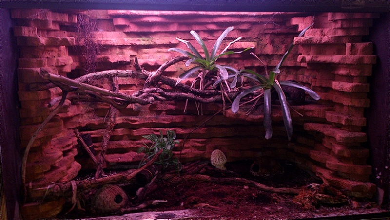 Réaménagement terrarium Terral10