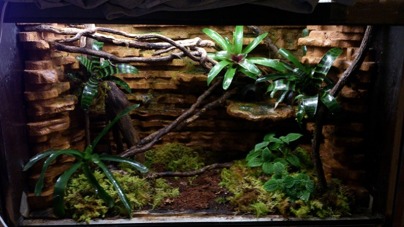 Réaménagement terrarium Terral11