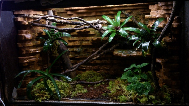 Réaménagement terrarium Terral12