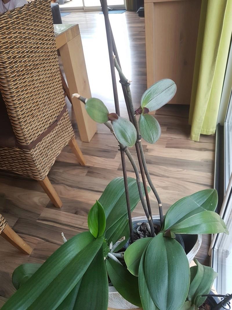 comment multiplier les orchidées Dsc_0010
