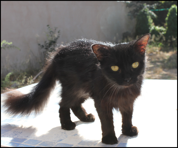 BELLA superbe chatoune poils mi-longs Img_6810