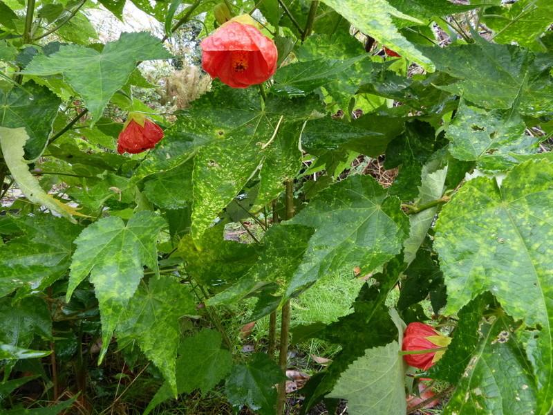 bouquets de souvenirs d'été Abutil10
