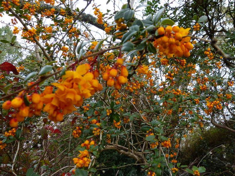 explosion florale - Page 2 Berber10