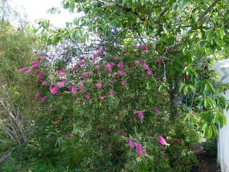 les jardins sont beaux en mai ! - Page 3 Callis18
