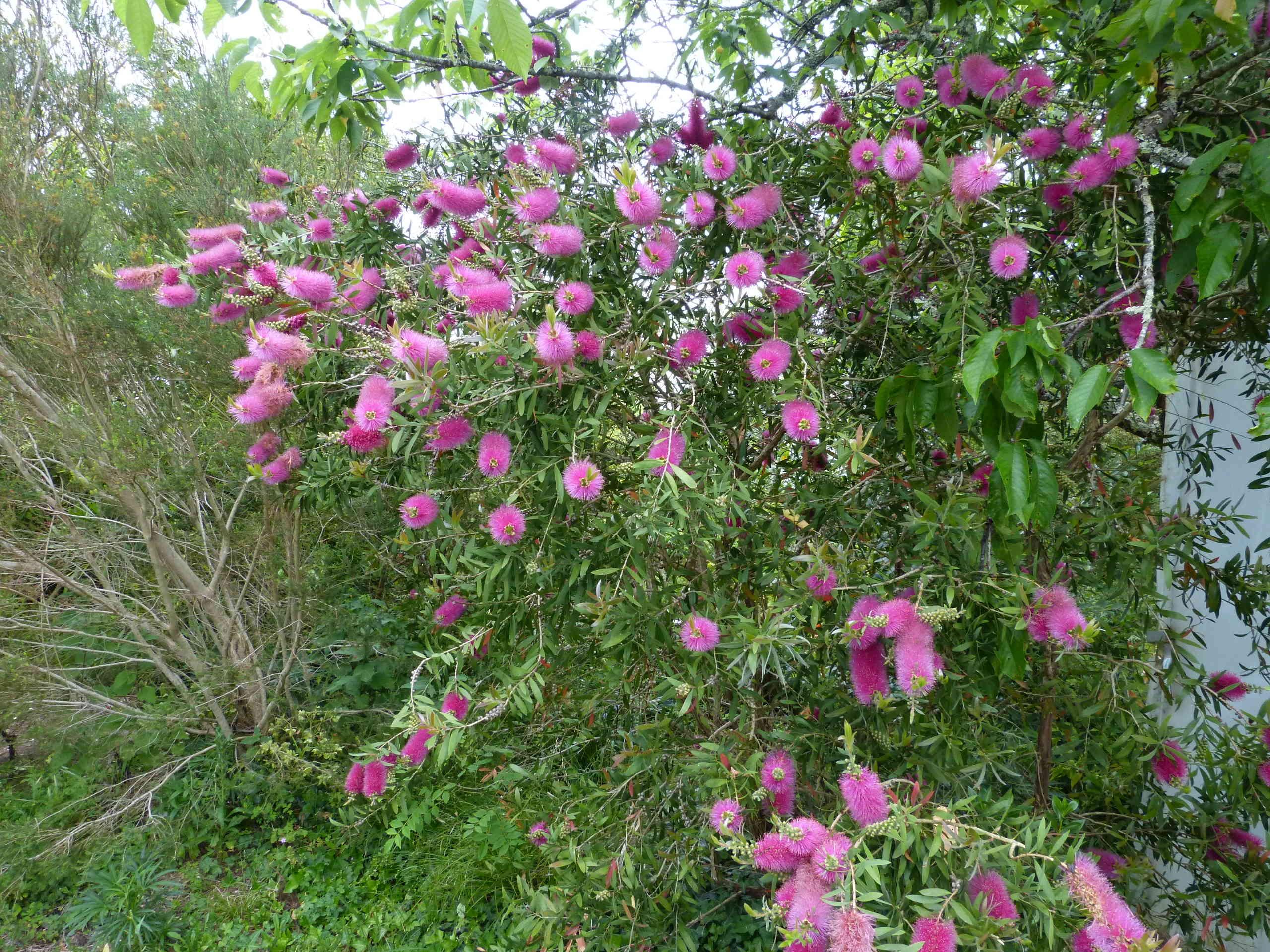 les jardins sont beaux en mai ! - Page 5 Callis20