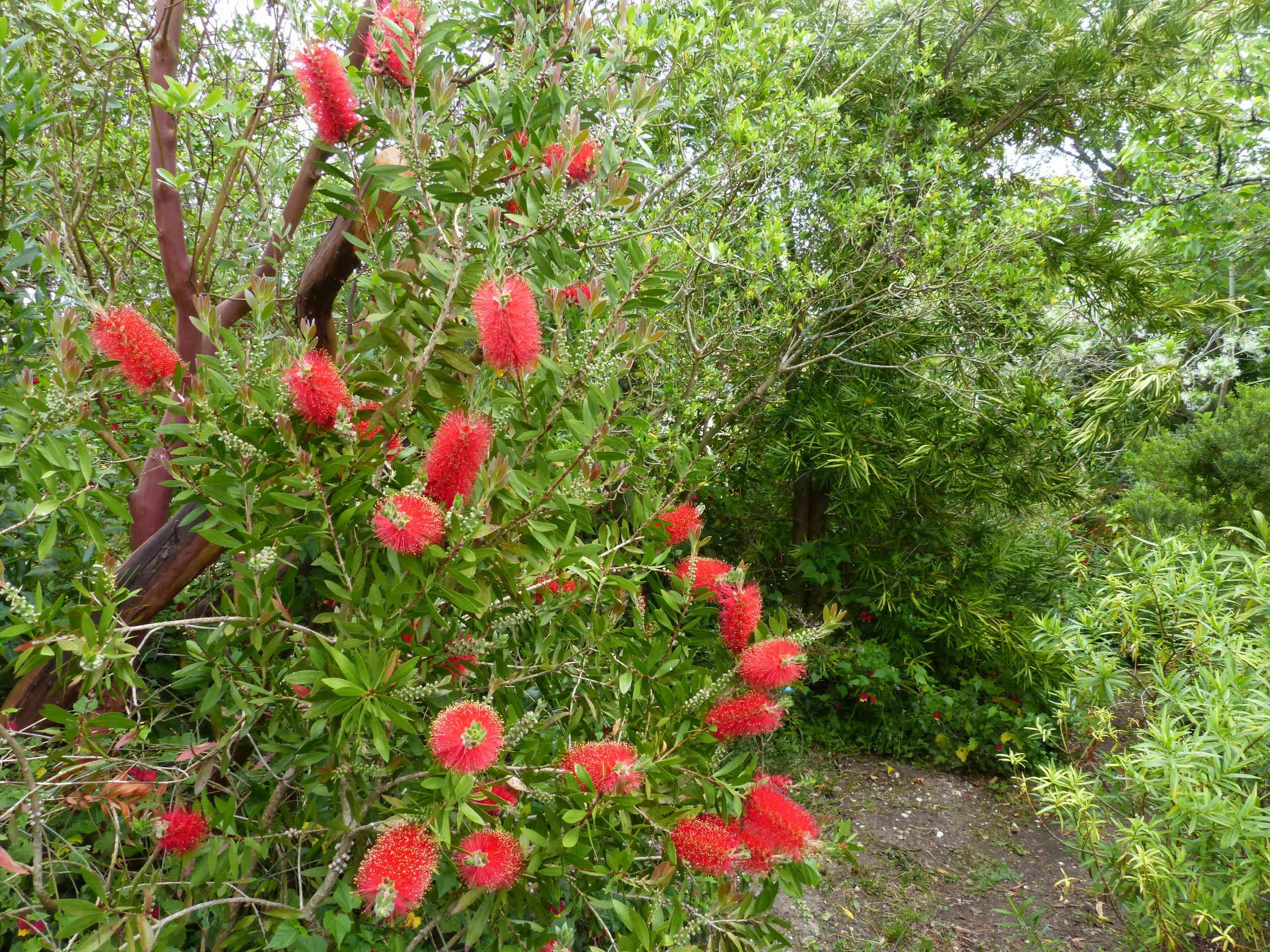 les jardins sont beaux en mai ! - Page 5 Callis22